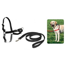 Pettorina Easy Walk M Nero