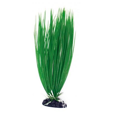 Plant Classic Acorus Sm