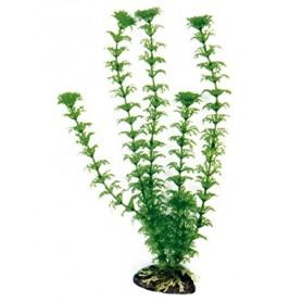 Plant Classic Cabomba Lg