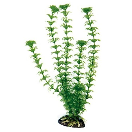 Plant Classic Cabomba Xl
