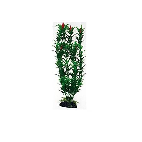 Plant Classic Egeria Flowers Bicolour Lg