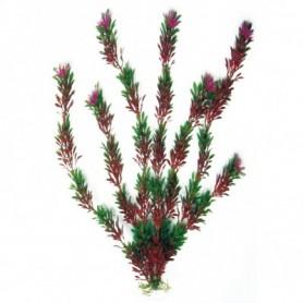 Plant Classic Flora Bicolour Md