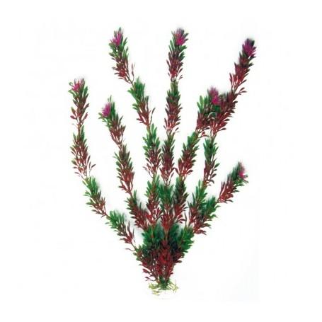 Plant Classic Flora Bicolour Sm