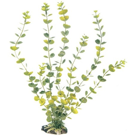 Plant Classic Hydrocotyle Lg