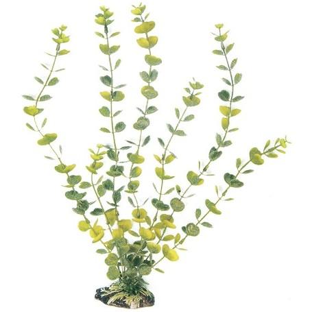 Plant Classic Hydrocotyle Md