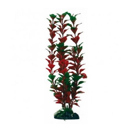 Plant Classic Ludwigia Md