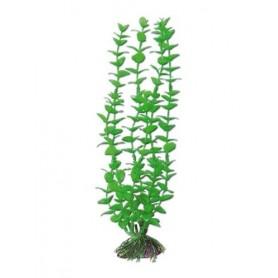 Plant Classic Rotala Lg