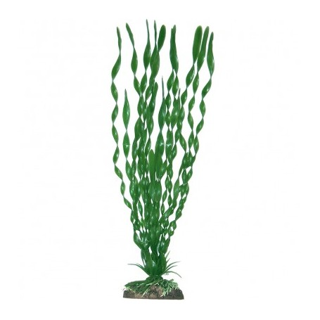Plant Classic Valisneria Major Sm