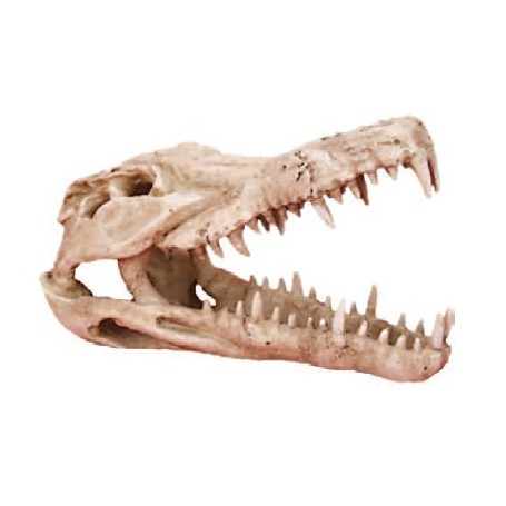 Decorazione Teschio Alligatore